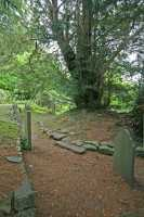 Ancient yew tree (c) Countryscape